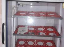 دستگاه جوجه کشی بلدرچین دماوند در شیپور-عکس کوچک