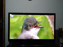 تلویزیون 43 اینچ پلاسمای سامسونگ در شیپور