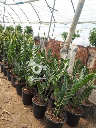 گل و گیاه  فروشی در گروه خرید و فروش خدمات و کسب و کار در قزوین در شیپور-عکس2