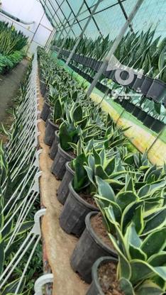 گل و گیاه  فروشی در گروه خرید و فروش خدمات و کسب و کار در قزوین در شیپور-عکس4