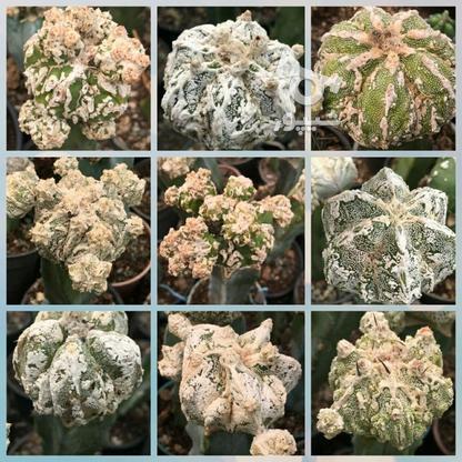 گل و گیاه  فروشی در گروه خرید و فروش خدمات و کسب و کار در قزوین در شیپور-عکس5