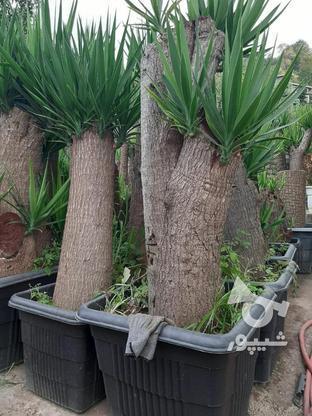 گل و گیاه  فروشی در گروه خرید و فروش خدمات و کسب و کار در قزوین در شیپور-عکس7