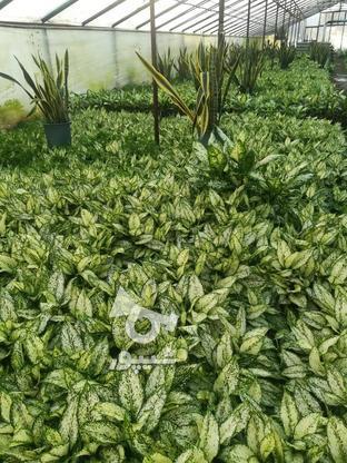 گل و گیاه  فروشی در گروه خرید و فروش خدمات و کسب و کار در قزوین در شیپور-عکس1