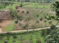 فروش زمین 2000 متر در تنگه لته در شیپور-عکس کوچک