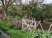 فروش باغ 1200 متر در پرچیکلا در شیپور-عکس کوچک