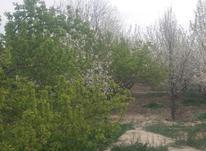 350متر باغچه در قجرآباد  در شیپور-عکس کوچک