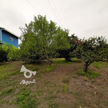 فروش شرکت خوراک دام وطیور) 15228میاندرود در گروه خرید و فروش املاک در مازندران در شیپور-عکس13