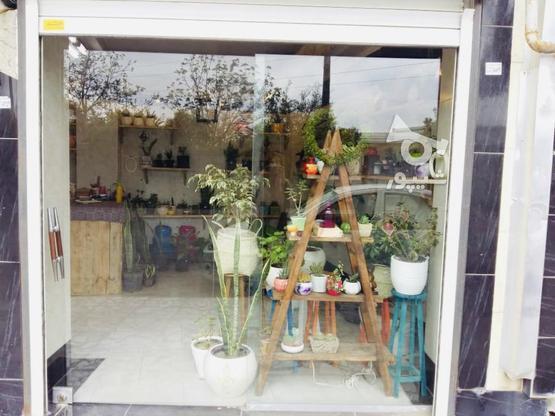 16 متر مغازه تجاری در گروه خرید و فروش املاک در مازندران در شیپور-عکس1