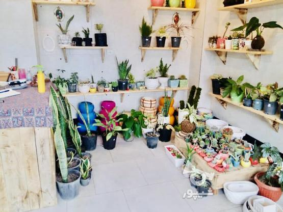 16 متر مغازه تجاری در گروه خرید و فروش املاک در مازندران در شیپور-عکس2