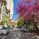 فروش زمین مسکونی 400 متر در آستانه اشرفیه