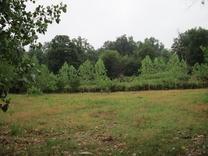 فروش زمین مسکونی 2224 متر در رامسر در شیپور