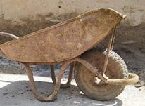 فرقون جنس قدیم اصلی در شیپور-عکس کوچک