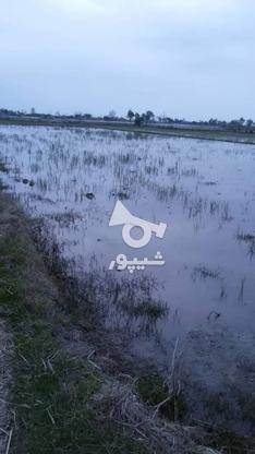 فروش زمین کشاورزی 2600 متر در بابل درزی کلا در گروه خرید و فروش املاک در مازندران در شیپور-عکس3