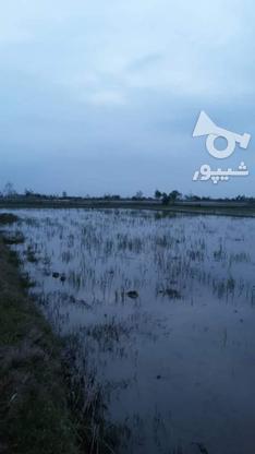 فروش زمین کشاورزی 2600 متر در بابل درزی کلا در گروه خرید و فروش املاک در مازندران در شیپور-عکس2