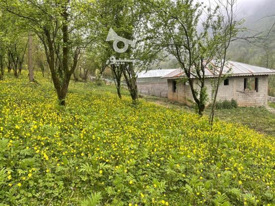 فروش زمین مسکونی 2000 متر در تنیان در گروه خرید و فروش املاک در گیلان در شیپور-عکس1