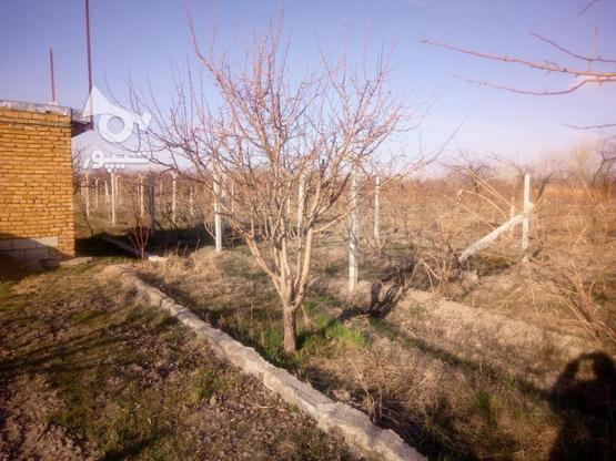 3360متر الوان روستای مقدم در گروه خرید و فروش املاک در آذربایجان غربی در شیپور-عکس3