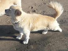 سگ به سرقت رفته در شیپور