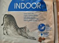 غذا خشک گربه در شیپور-عکس کوچک