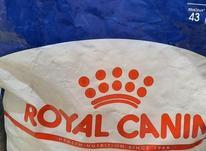 غذای سگ رویال در شیپور-عکس کوچک