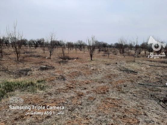 فروش 2جریب باغ در یک قواره پشت بحر بیگیر در گروه خرید و فروش املاک در زنجان در شیپور-عکس5