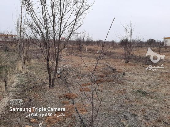 فروش 2جریب باغ در یک قواره پشت بحر بیگیر در گروه خرید و فروش املاک در زنجان در شیپور-عکس2