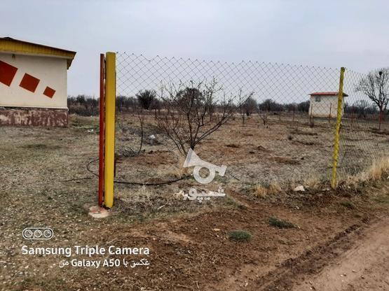 فروش 2جریب باغ در یک قواره پشت بحر بیگیر در گروه خرید و فروش املاک در زنجان در شیپور-عکس4