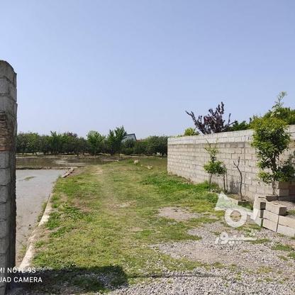 فروش زمین مسکونی 500 متر در بابلسر در گروه خرید و فروش املاک در مازندران در شیپور-عکس2