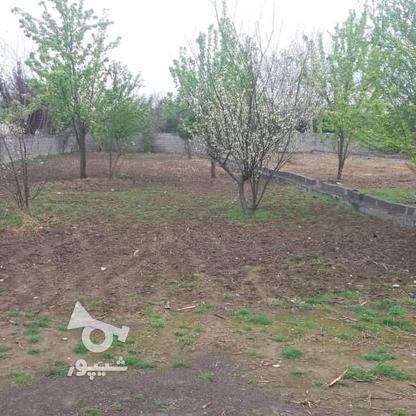 فروش باغ مسکونی 418 متر دربهنمیر در گروه خرید و فروش املاک در مازندران در شیپور-عکس2