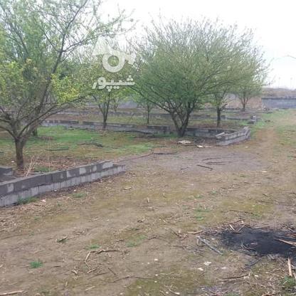 فروش باغ مسکونی 418 متر دربهنمیر در گروه خرید و فروش املاک در مازندران در شیپور-عکس4