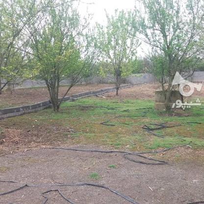 فروش باغ مسکونی 418 متر دربهنمیر در گروه خرید و فروش املاک در مازندران در شیپور-عکس1