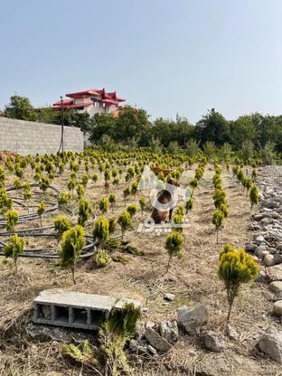 فروش زمین کشاورزی 1250 متر در تنکابن در گروه خرید و فروش املاک در مازندران در شیپور-عکس1