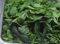پخش سبزی خوردن فله ای در شیپور-عکس کوچک