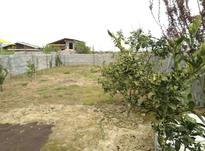 زمین کشاورزی سنددار 243 متری در بهنمیر در شیپور-عکس کوچک