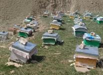 فروش کندو زنبور عسل  در شیپور-عکس کوچک
