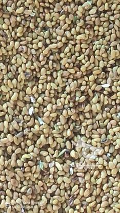 200کیلو بذر(قره)  یونجه  در گروه خرید و فروش خدمات و کسب و کار در آذربایجان شرقی در شیپور-عکس2