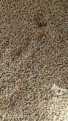 200کیلو بذر(قره)  یونجه  در گروه خرید و فروش خدمات و کسب و کار در آذربایجان شرقی در شیپور-عکس4