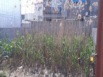 فروش زمین مسکونی 105 متر در بابلسر در شیپور