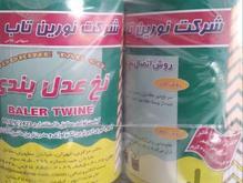 دو عدد نخ یونجه نورین تاب  در شیپور