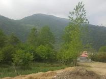 زمین مسکونی 275 متر در تنکابن در شیپور
