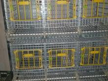قفس تخمگذار در شیپور