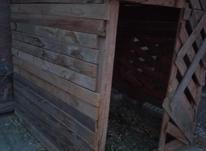 قفس چوبی مخصوص نگهداری مرغ خروس در شیپور-عکس کوچک