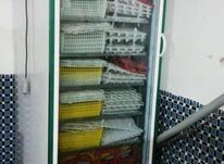 2 عدد دستگاه جوجه کشی در شیپور-عکس کوچک