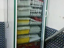 2 عدد دستگاه جوجه کشی در شیپور