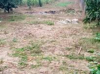 زمین مسکونی 1,800 متری جاده نظامی پاشاکلا در شیپور-عکس کوچک