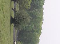 شمال هرازفروش زمین باغی13000 متر در آمل در شیپور-عکس کوچک