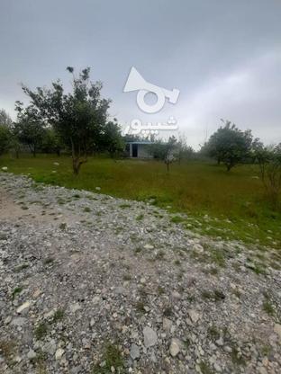زمین داخل بافت در گروه خرید و فروش املاک در مازندران در شیپور-عکس2
