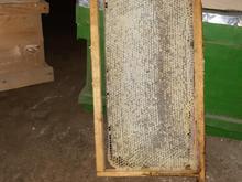 عسل طبیعی زنبور عسل  در شیپور