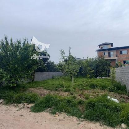 فروش زمین مسکونی 320 متری در خ کفشگرکلاه در گروه خرید و فروش املاک در مازندران در شیپور-عکس3