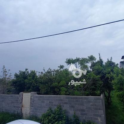 فروش زمین مسکونی 320 متری در خ کفشگرکلاه در گروه خرید و فروش املاک در مازندران در شیپور-عکس5