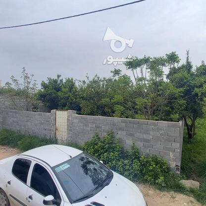 فروش زمین مسکونی 320 متری در خ کفشگرکلاه در گروه خرید و فروش املاک در مازندران در شیپور-عکس1